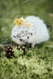 Hedgehog sitting in the forest, on it a cone and moss royalty free stock image