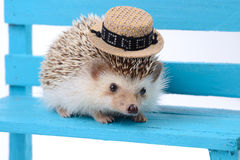 Hedgehog with small hat. Stock Photography