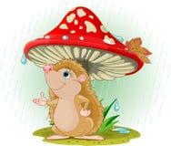 Hedgehog sob o cogumelo Imagens de Stock
