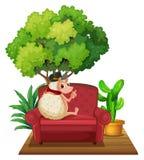 Hedgehog on Sofa Stock Photography