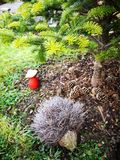 hedgehog standing under spruce, red toadstool and cones royalty free stock photo