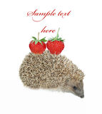 Hedgehog with strawberry isolated on white Royalty Free Stock Photo