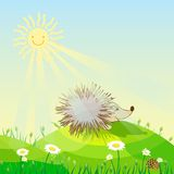 Hedgehog. On a sunny meadow sunshine daisies bloom Royalty Free Stock Photo