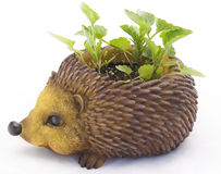 Hedgehog - a support for colors Royalty Free Stock Photo