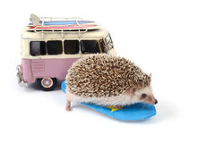 Hedgehog on surfboard and toy car. Stock Image