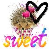 Hedgehog T-shirt lettering graphics. Hedgehog  illustration watercolor. Text sweet  Stock Image