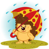 Hedgehog with umbrella in rain Royalty Free Stock Image