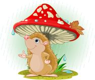 Hedgehog under Mushroom stock images