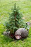 Hedgehog under a pine. Toy Hedgehog on a lawn under a pine Royalty Free Stock Image