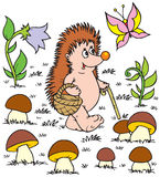 Hedgehog (vector clip-art) Royalty Free Stock Photos
