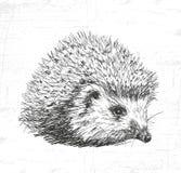 hedgehog Vedi inoltre gli altri insiemi degli animali Immagine Stock