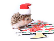 Hedgehog wearing Santa hat with Christmas tree. Royalty Free Stock Photography