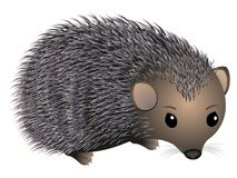 Hedgehog. Royalty Free Stock Images