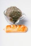 Hedgehog on white background Stock Images