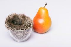 Hedgehog on white background Royalty Free Stock Photography