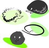 Hedgehogs Ilustração do Vetor