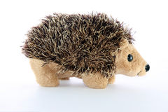 Hedgehogs Royalty Free Stock Images