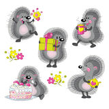 Hedgehogs Stock Image