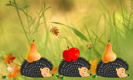 Hedgehogs in autumn,in the garden or in the field Royalty Free Stock Images