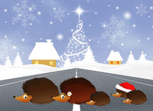 Hedgehogs at Christmas Royalty Free Stock Images