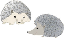 Hedgehogs Stock Image