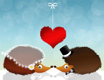 Hedgehogs in love Royalty Free Stock Images