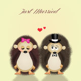 Hedgehogs spouses Stock Images