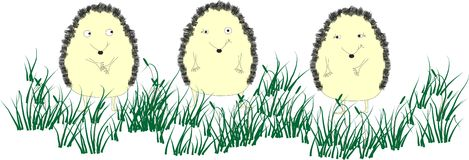 Hedgehogs Stock Photography