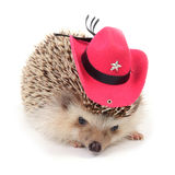 Hedgehot z czerwonym kowbojskim kapeluszem. Fotografia Stock