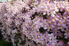Hedgerow цветка Стоковые Фото