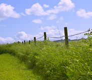 Hedgerow Royalty Free Stock Photo