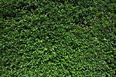 hedgerow коробки Стоковые Фотографии RF
