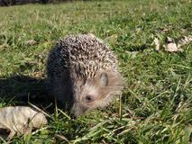 hedgerow Zdjęcie Royalty Free