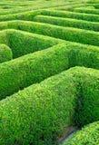 Hedgerow Imagem de Stock