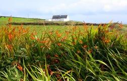 Hedgerow Colourful, Irlanda occidentale fotografia stock
