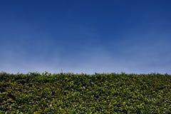 Hedgerow della casella Immagine Stock Libera da Diritti