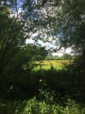 Through the hedgerow. Durley fields Hampshire countrside Stock Image
