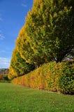 Hedgerow ed alberi del giardino immagini stock libere da diritti