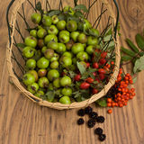 Hedgerow Fruits Royalty Free Stock Images
