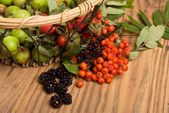 Hedgerow Fruits Royalty Free Stock Photo