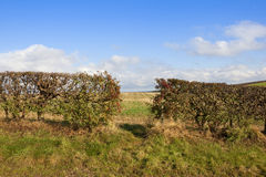 Hedgerow with a gap Stock Images