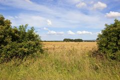 Hedgerow gap and scenery Stock Photography