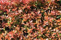 Hedgerow Texture Stock Photo