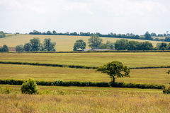 Hedgerows and fields in England Royalty Free Stock Photos