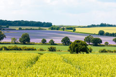 Hedgerows & fields landscape in England Stock Images