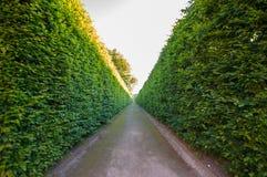 hedges Fotografia de Stock