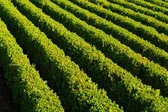 hedges Royalty Free Stock Photo