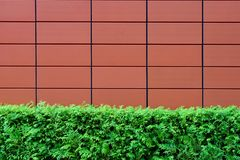 Hedges and Brown Tiled Wall Royalty Free Stock Photo