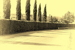Hedges and Cypresses Stock Photo