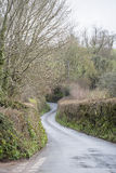 The Hedges of Devon. Stock Image